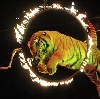 Цирки в Хвастовичах